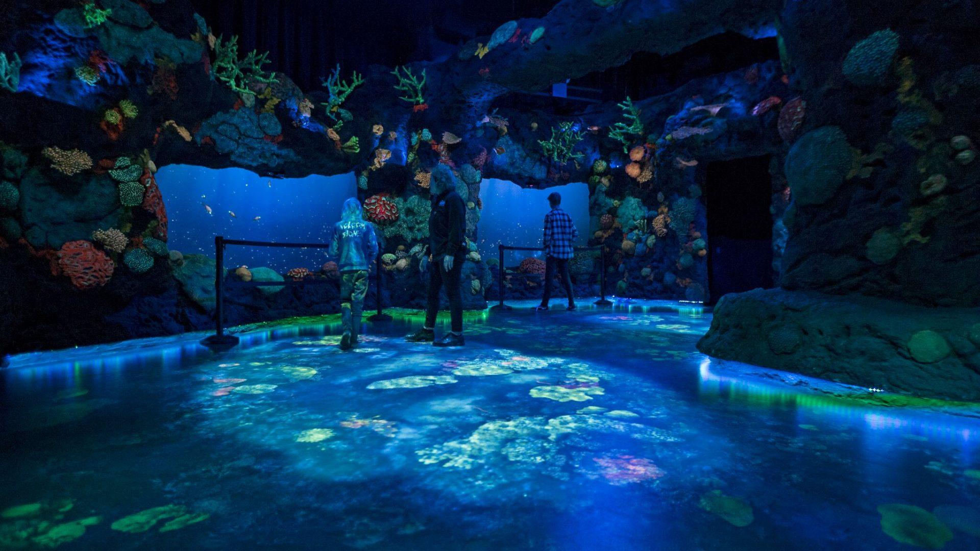 Interactive display showing coral reef at night