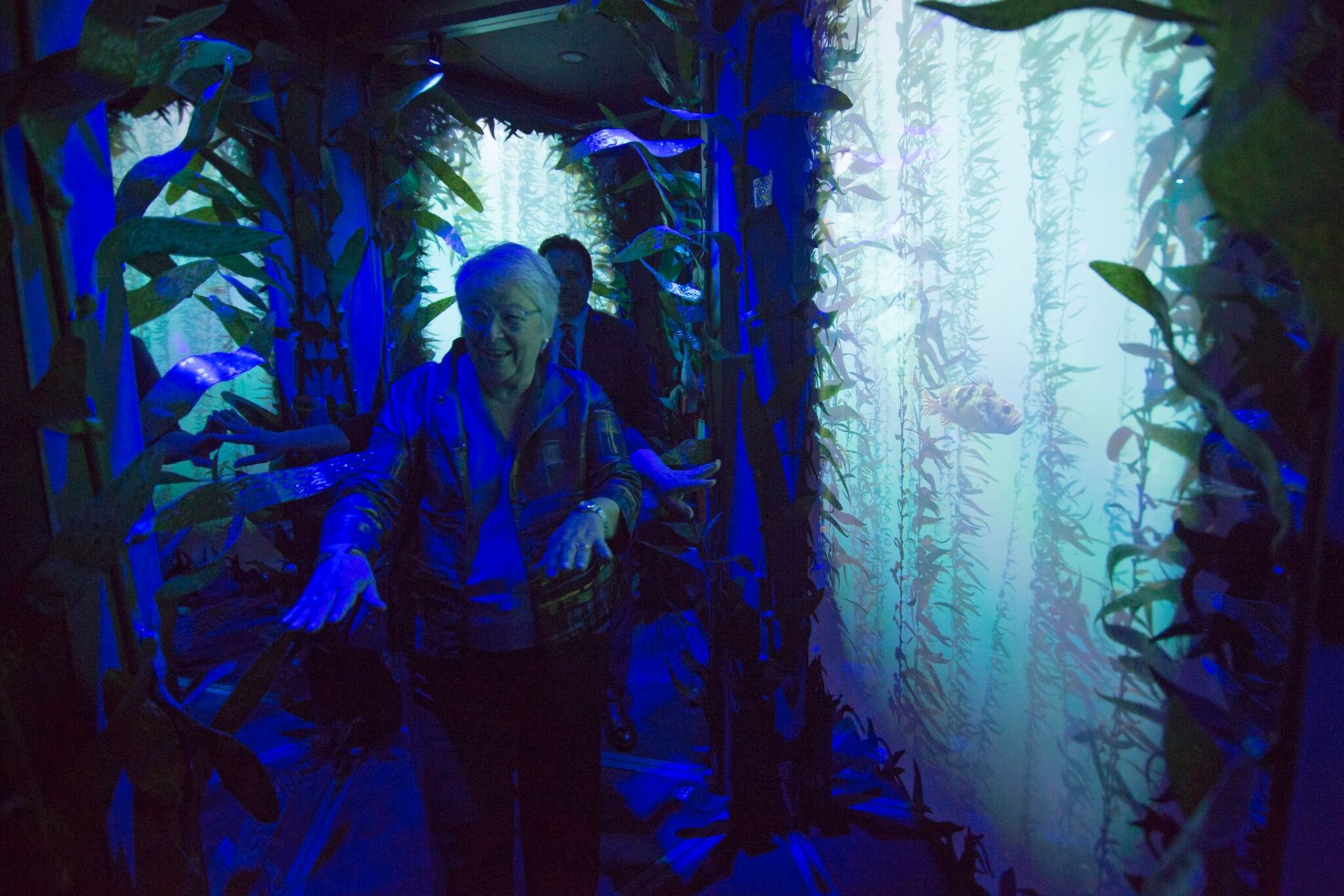 The kelp forest mirror maze at the National Geographic Encounter: Ocean Odyssey